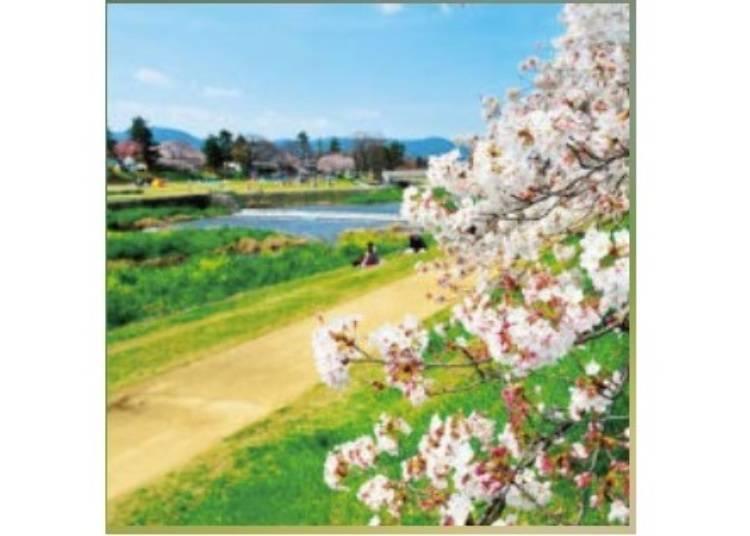2. 【기타오지】자연이 풍요로운 강변의 '가모 강 나카라기의 길'