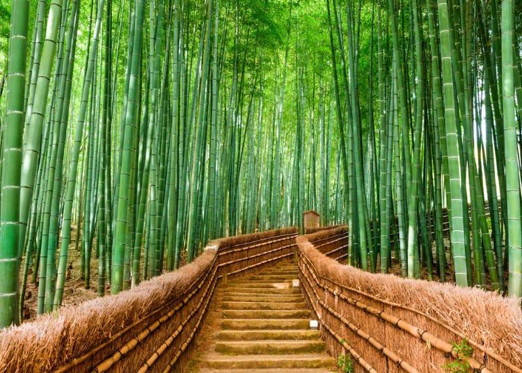 京都免費景點③【嵐山】穿越幽靜的仙境「竹林之道」