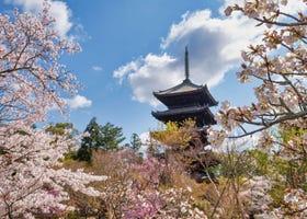 2021京都賞櫻景點10選+開花時間預測!嵐山、哲學之道、仁和寺