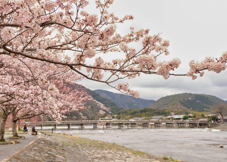 5.渡月橋から見渡す雄大な桜景色【京都嵐山】
