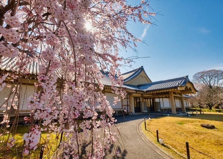 4. 被称为「花之醍醐」的樱花景点「醍醐寺」