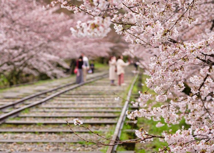 9. 走在鐵軌上邊欣賞兩旁的櫻花「蹴上傾斜列車」