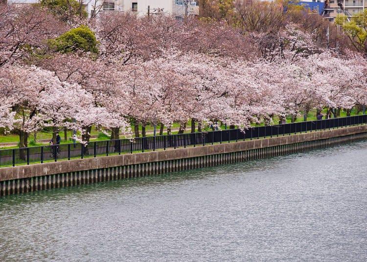 4. Kema Sakuranomiya Park: Osaka Cherry Blossom Tree Promenade