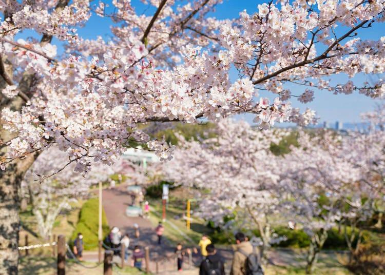 1. 풍광이 수려한 명승지 '셋츠쿄 공원'
