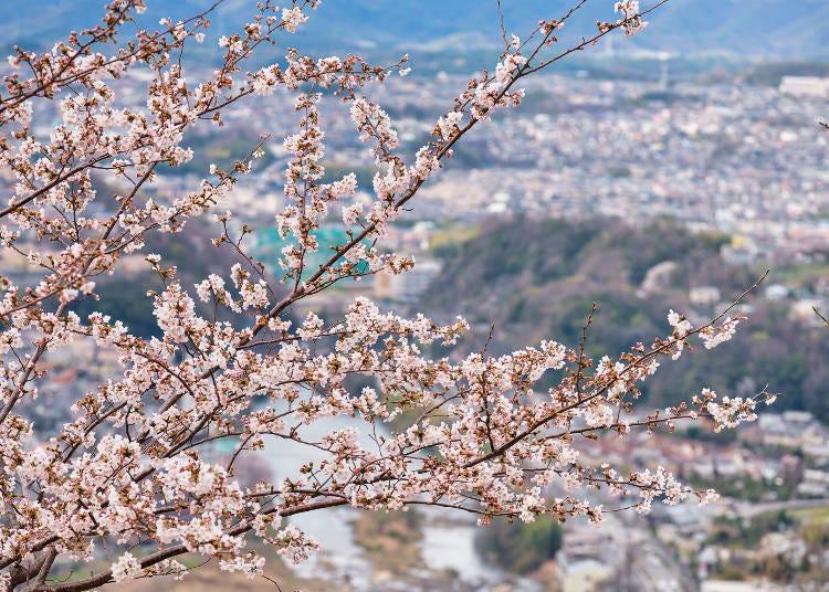 3. 이케다시의 상징 '사츠키야마 공원'