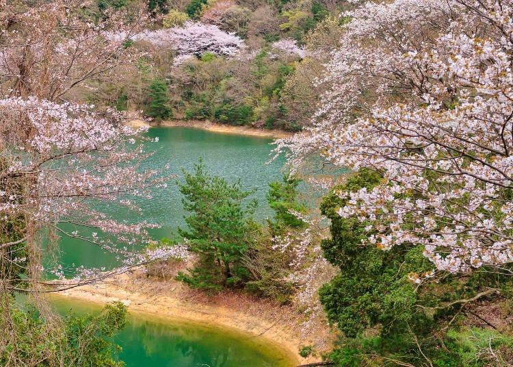 9. 벚꽃을 감상하며 댐 주변을 산책하는 '에이라쿠 댐'