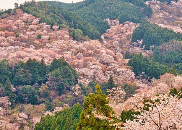 奈良のおすすめ桜名所10選!長谷寺など有名お花見スポットの見頃や穴場を紹介!