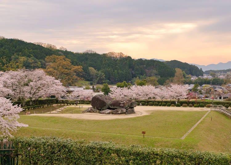 5. Ishibutai Kofun: A postcard-like scene! Nara cherry blossoms add color to the huge tumulus