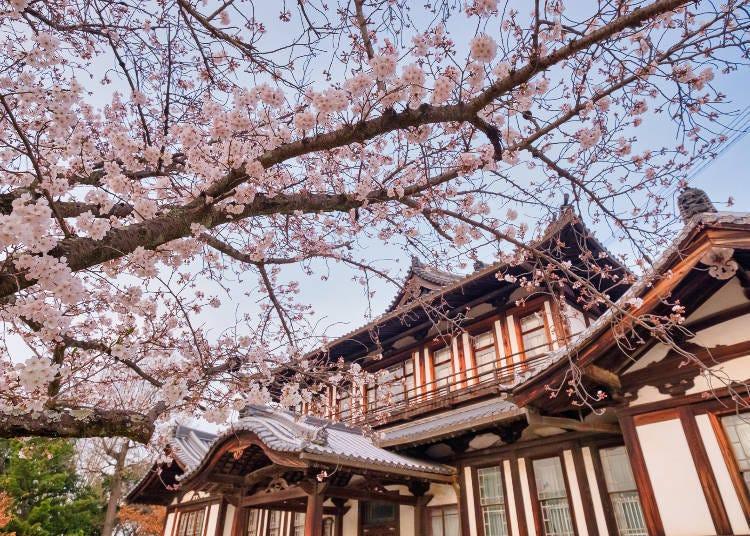3. 천수대에서 '고텐자쿠라'를 바라보는 '고리야마 성터 공원'