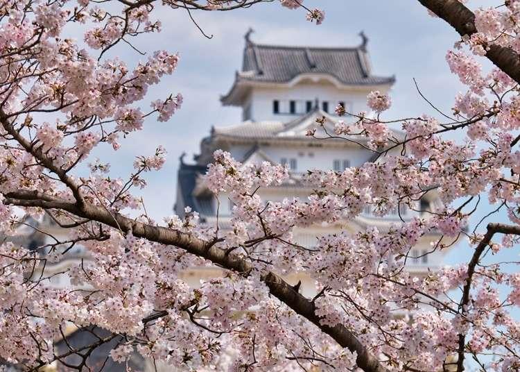 고베시 근교의 벚꽃 명소 총정리! 히메지 성 등 대표적 명소부터 숨은 명소까지 10곳!