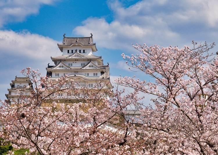 1. 桜色の雲に浮かぶ白壁の名城【姫路城】