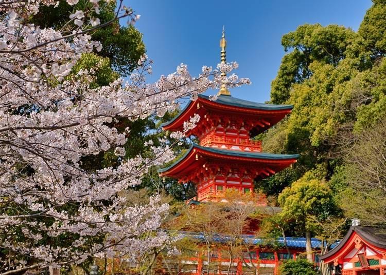 5. 문학과 역사의 로망이 살아 숨쉬는 벚꽃 명소 [대본산 스마데라]