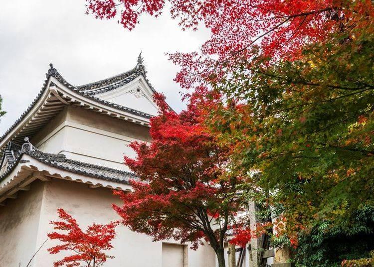 3. Nijo Castle: Harmony of Kyoto autumn leaves and Honmaru Garden