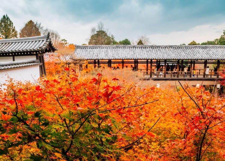 2:眼下に広がるかえでの雲海「東福寺」
