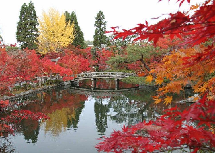 京都赏枫景点⑤超过3000棵枫树交织出绝美景色「永观堂」