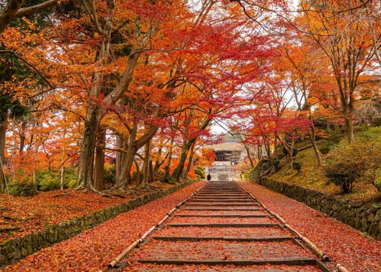 京都赏枫景点⑥踏上大红落叶地毯「毗沙门堂」