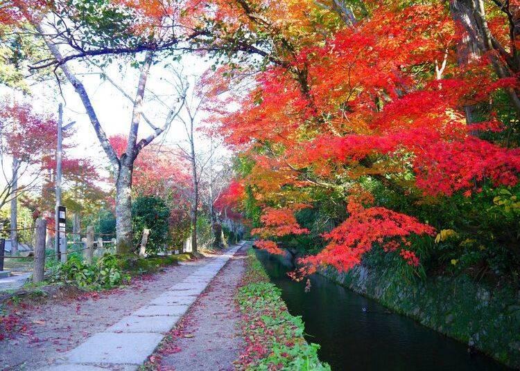 京都賞楓景點④聆聽流水隨興散步「哲學之道」