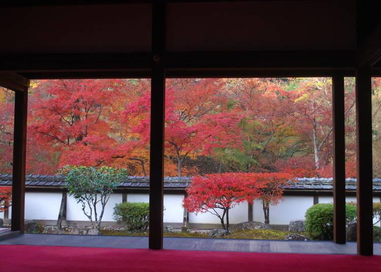 奈良賞楓景點⑥擁有紅葉「錦之里」美譽的「正歷寺」