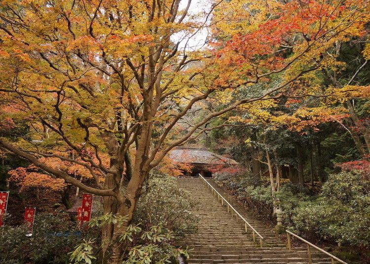 奈良賞楓景點⑦寺院與紅葉和諧之美「室生寺」