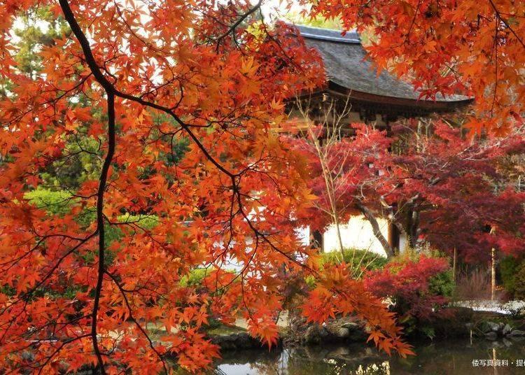 奈良賞楓景點⑧日本全國紅葉100選之「長岳寺」
