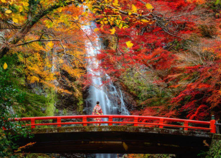 When and Where to See Osaka's Best Autumn Leaves