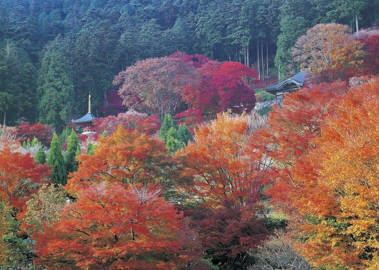 5. A 264,000 square meter panorama at Katsuoji