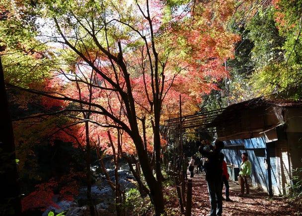 7:空いっぱいに広がるもみじ「摂津峡公園」