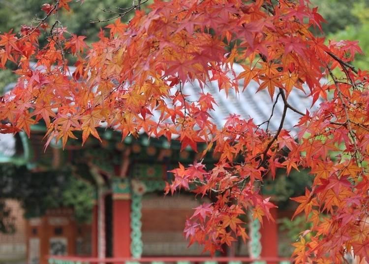 9: 도시부에서 누릴 수 있는 단풍의 끝판왕 '하나하쿠 기념공원 츠루미녹지'