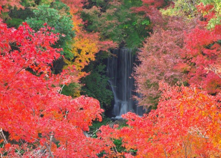 大阪賞楓景點③耀眼楓葉「萬博記念公園」