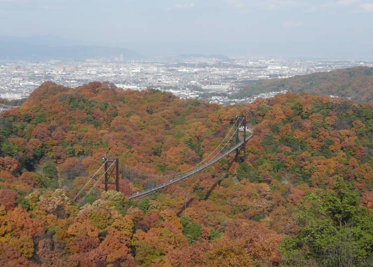 大阪賞楓景點⑥眺望紅葉空中散歩「HOSHIDA園地」