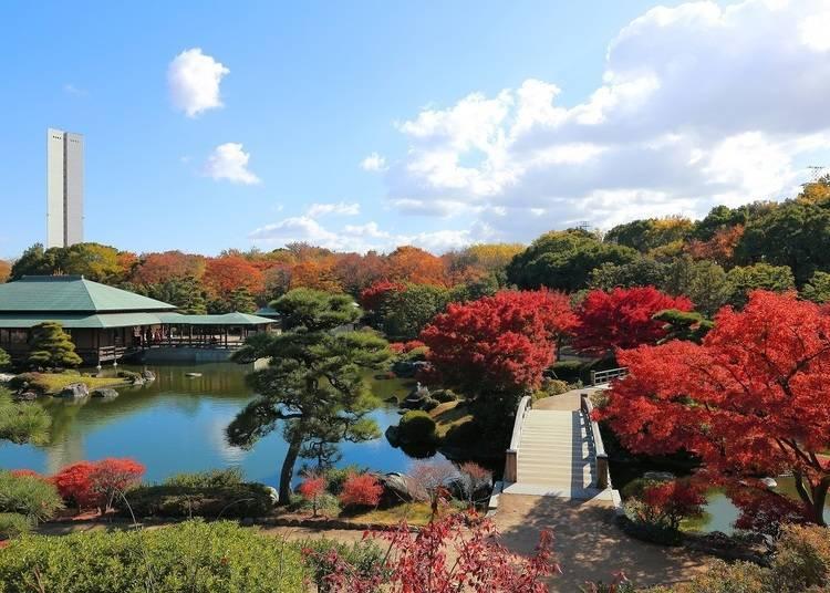 大阪賞楓景點⑧光艷色彩點綴日本庭園「大仙公園 日本庭園」