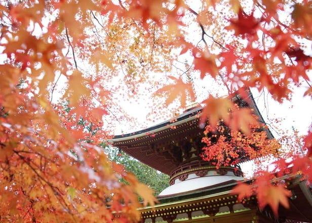 2020和歌山紅葉景點10選+最佳時期:寶泉寺、高野山等