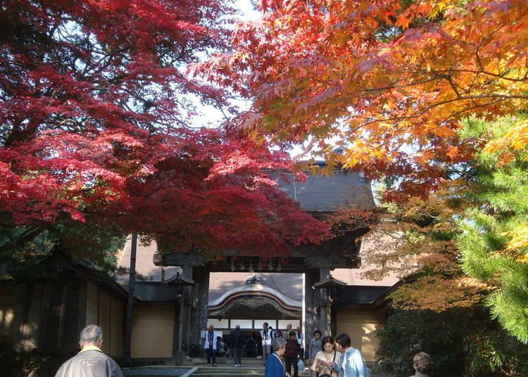 1:神秘的な山で紅葉体験「高野山・金剛峯寺」