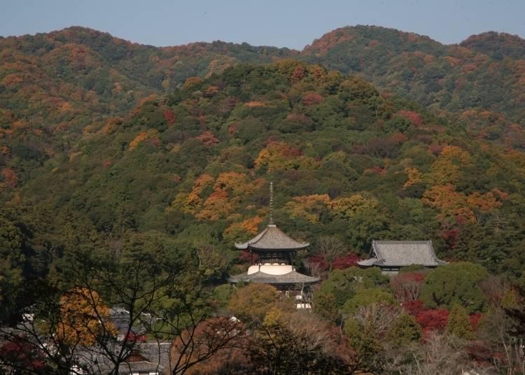 10:紅葉から覗く大塔がじつに神秘的「根來寺」