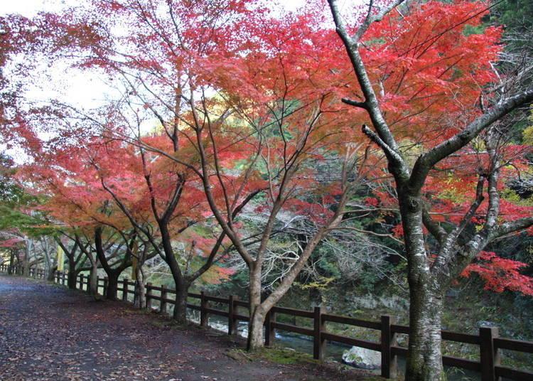 和歌山紅葉景點④欣賞奇石與楓葉的優美景色「玉川峽」