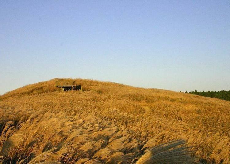 和歌山紅葉景點⑧整片芒草原宛如金黃色地毯的「生石高原」