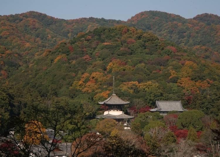 和歌山紅葉景點⑩欣賞隱身於楓林中的大塔「根來寺」