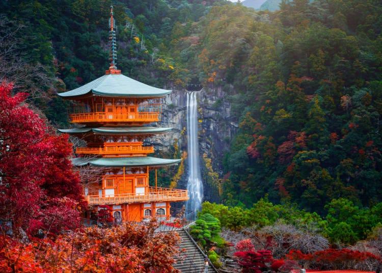 和歌山紅葉景點⑦彷彿置身於日本原始風景中的「熊野古道」