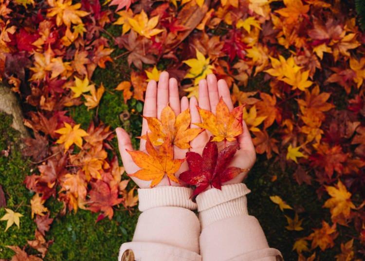秋天的京都,平均的氣溫和天氣如何呢?