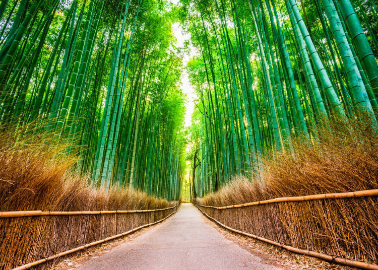 2. Arashiyama Bamboo Forest: Rejuvenate Yourself in the Famous Grove