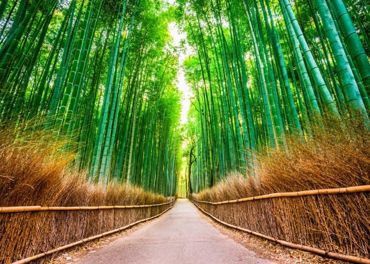 2. 「竹林の小径」で竹林に癒やされる