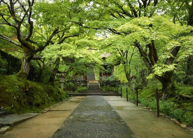 岚山一日游⑭在「常寂光寺」境内欣赏绿色枫叶或火红枫叶疗愈身心