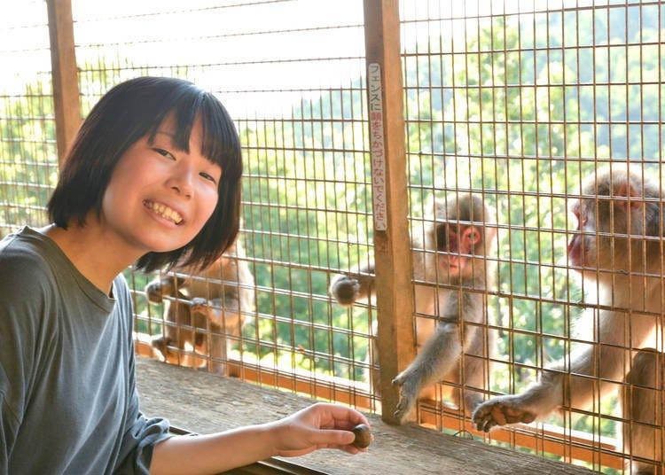 嵐山一日遊⑫前往「嵐山猴子公園 岩田山」近距離的欣賞日本獼猴