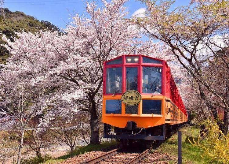 【保存版】嵐山「嵯峨野觀光小火車」攻略:預約方式、搭車地點、買票方法等