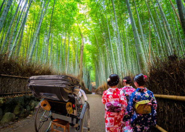 Arashiyama Bamboo Forest: Complete Guide to Kyoto's Iconic Area for First-Timers