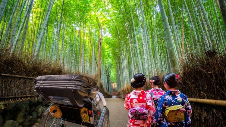 京都・嵐山の「竹林の小径」楽しみ方徹底ガイド【保存版】