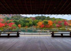 [保存版]京都天龍寺攻略:交通方式、參拜時間、入場費、寺內景點等