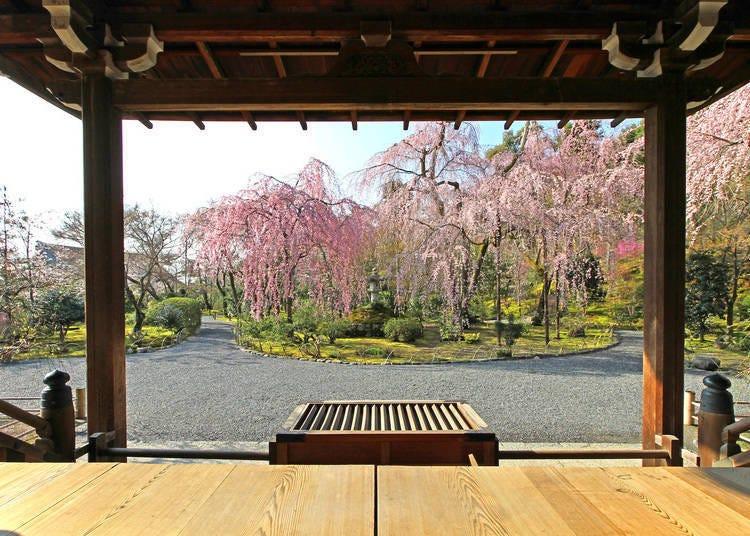 京都的天龍寺景色依季節也會有不同的樣貌!?