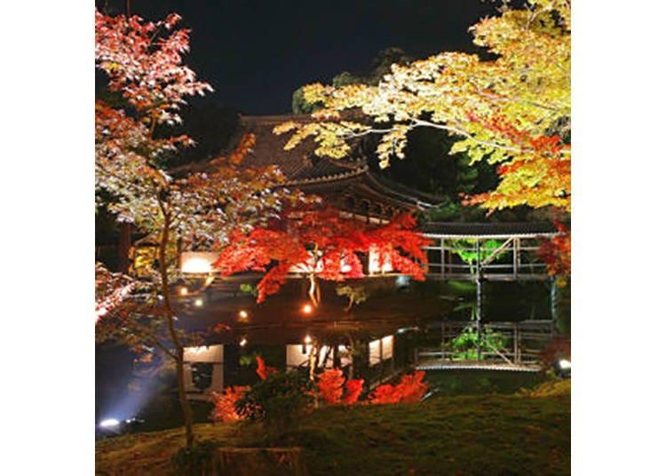 【高台寺】臥龍池に映る紅葉が美しいお寺