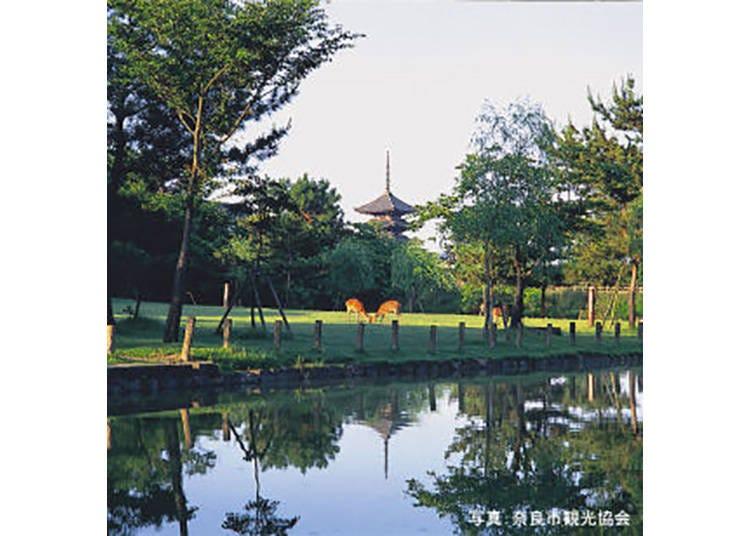 【奈良公園】鹿がたわむれる、奈良の名物公園